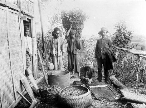 Petani gambir zaman Belanda (1910 - 1919)