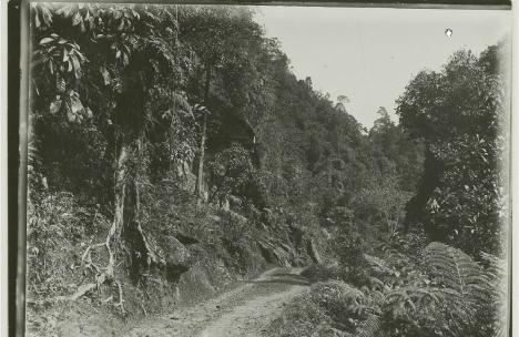Jalan dari Koto Alam ke Pangkalan Koto Baru tahun 1903 (Sumber: KITLV Belanda)